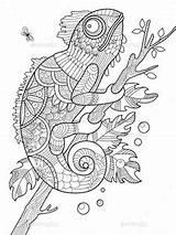 Colorare Coloring Pagine Mandala Adulti Disegni Zentangle Kolorowanki Wzory Vector Ale Animali Chameleon Adults Miscellaneous Vectors Adult Grown Ups Books sketch template