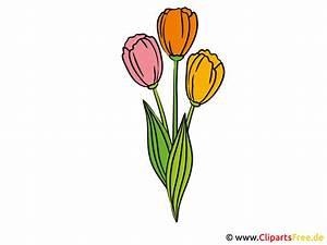 Tulpen Clipart  Clipart