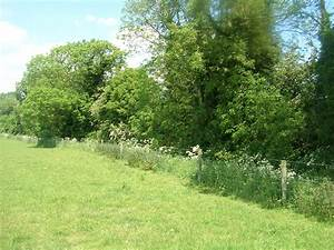 Hedgerows Habitat | Ecolandscapes: Landscaping with Native ...