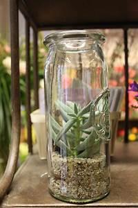 Minigarten Im Glas : sukkulenten im glas sukkulenten im glas 9 5 cm 2er set kunstpflanzen von dpi pflegeleichte ~ Eleganceandgraceweddings.com Haus und Dekorationen