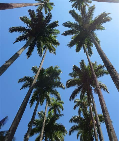 78 Wallpaper Aesthetic Palm Tree Hd  Best Wallpaper Hd