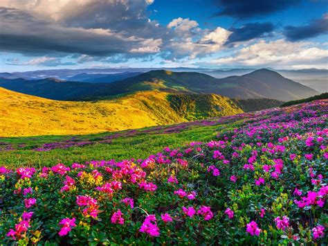 spring mountain landscape flowers purple colored hills