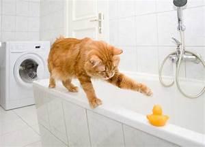 Is your cat your bathroom buddy catster for Cat bathroom door