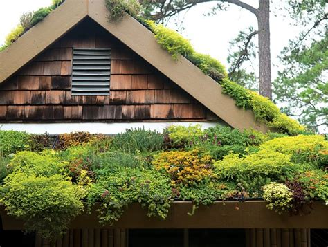 green roofs garden design