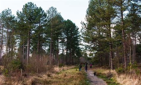 Sika Trail  Wareham Forest  Dorset Mountain Biking