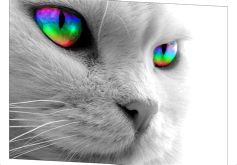 Katzen Design Möbel by Grayscale Cat Wallpaper But Rainbow Wallpapers Hd