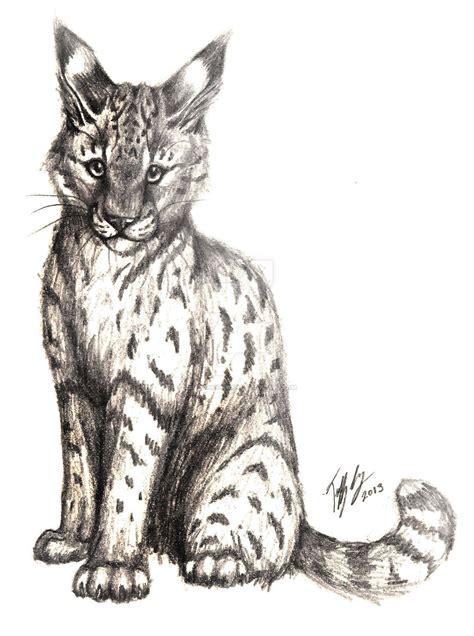 wild cat pencil drawing  captainmorwen  deviantart