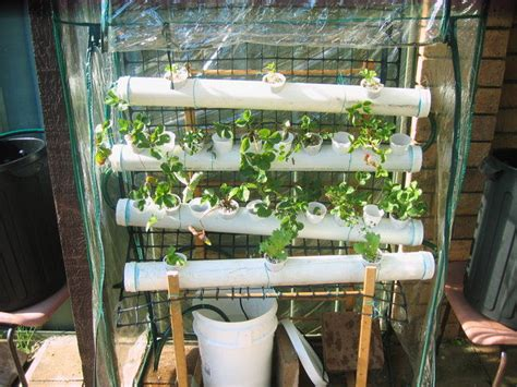 hydroponic vegetable garden design home ideas modern