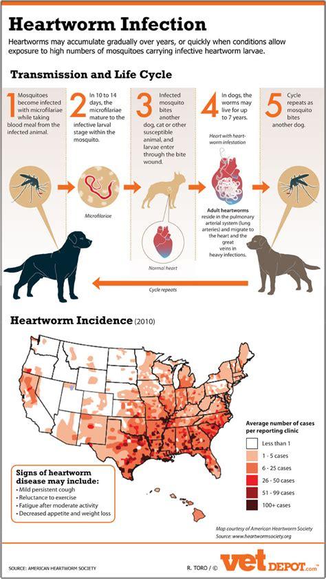 heartworm treatment dog heartworms vetdepot com