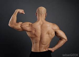 What Are The Different Types Of Muscular Endurance Exercises