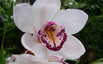 Orchid Lovely Kind