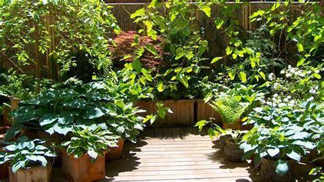 piante terrazzo 10 piante da balcone sempreverdi