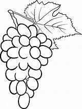 Coloring Pages Grape Fruits Grapes Recommended sketch template