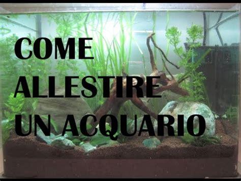 ghiaia per acquario acqua dolce come allestire un acquario d acqua dolce tank 25 litri