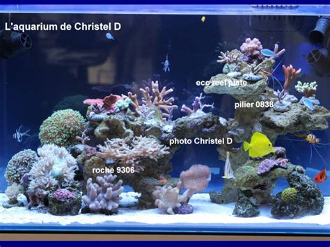 central decors and aquascapes aquaroche