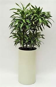 Hydrokultur Pflanzen Kaufen : pflanzenarrangements mit hydrokulturpflanzen pflanzen mieten ~ Buech-reservation.com Haus und Dekorationen