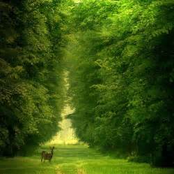 TOUCHING HEARTS: GREEN NATURE and more...