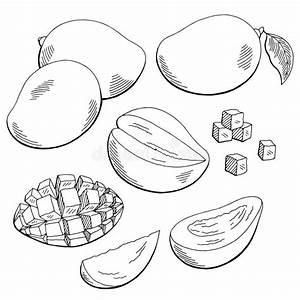 Mango Fruit Graphic Black White Isolated Sketch ...
