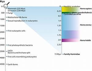 Evolutionary Perspectives on the Human Gut Microbiome ...