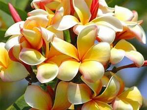 Exotic Flowers Wallpapers