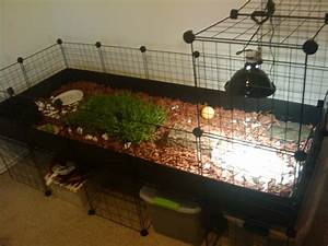 tortoise box | Tortoise Enclosure [In Progress] - Tortoise ...