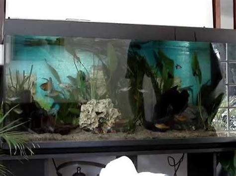 d 233 coration plantation aquarium d eau douce