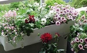 Blumen Für Südbalkon : video balkonkasten mit sommerblumen bepflanzen garten ~ Watch28wear.com Haus und Dekorationen