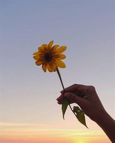 aesthetic tumblr wallpaper iphone bunga matahari