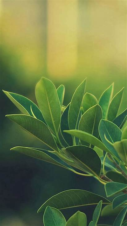 Leaves Wallpapers S8 Galaxy Iphone