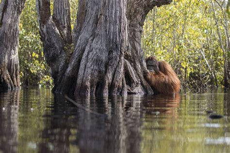 inilah foto foto wildlife terbaik    dunia