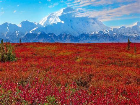 denali national park  preserve ak united states