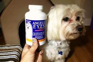 dog tear stains how to keep your dogs eyes clean With angel eyes dog