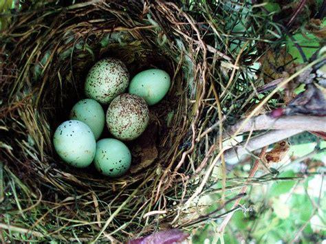 nest june 5 nest egg and bird