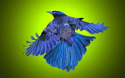 beautiful bird hd wallpaper beautiful hd wallpaper