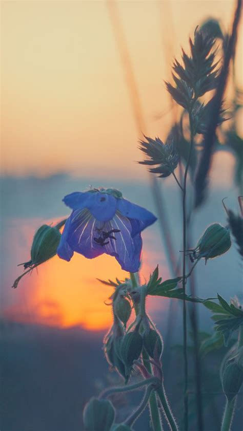 flower find  nature themed wallpapers