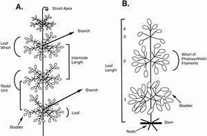 Plant Morphology Diagram