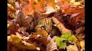 Bilder Herbst Kostenlos : herbst gr e youtube ~ Somuchworld.com Haus und Dekorationen