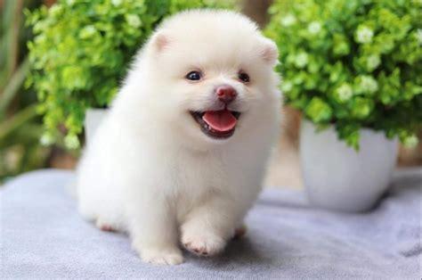 สุนัขยอดนิยม จัดอันดับสุนัขที่คนเลี้ยงมากที่สุดในประเทศไทย ...