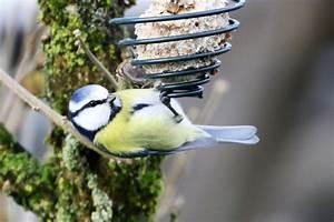Singvögel Im Garten : singv gel im garten blaumeise informationen und bilder fotos und reiseberichte im internet ~ Whattoseeinmadrid.com Haus und Dekorationen