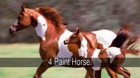 horses around breeds