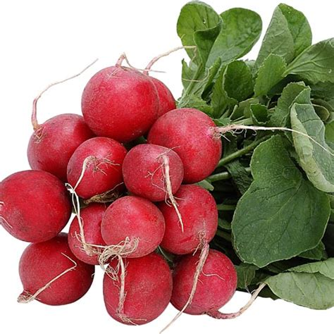 what is radish radish facts health benefits nutritional value and pictures