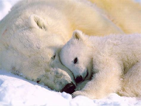 ANIMALS WALLPAPERS Beautiful Cool Wallpapers