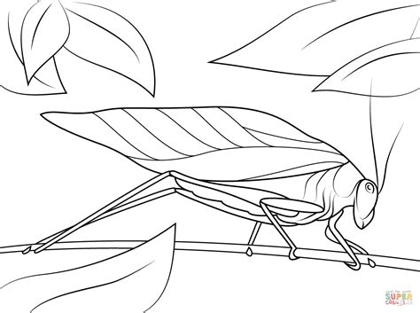 Coloring Drawing by Katydid Coloring Page Free Printable Coloring Pages