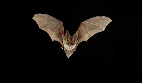 rabid bats discovered santa clarita valley