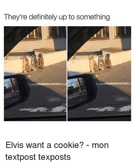 Want A Cookie Meme - they re definitely up to something elvis want a cookie mon textpost texposts definitely