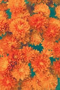 vintage floral pattern   Tumblr