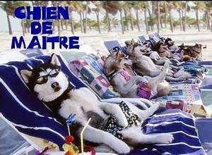 Hotel Pour Chien : h tel pour chiens j rusalem fzahra ~ Nature-et-papiers.com Idées de Décoration