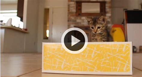 que faire avec une boite de mouchoir vide quand un chaton rencontre une bo 238 te de mouchoirs que se