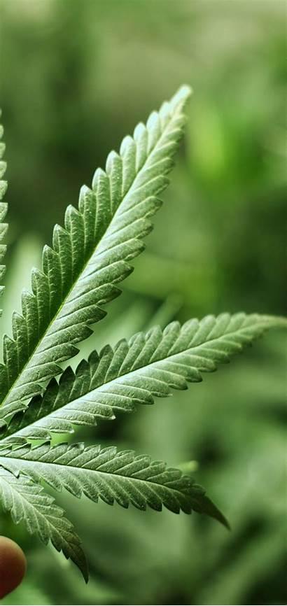 Marijuana Weed Wallpapers 1080 Background 3d3 Desktop