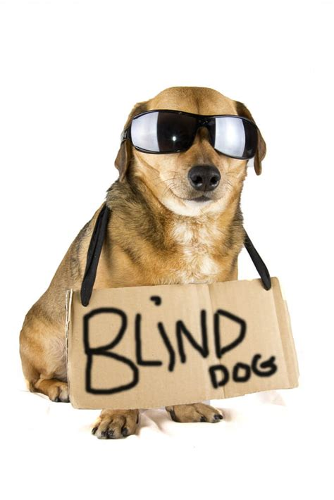 dog trainer   handle  blind dog quick